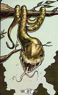 A cobra
