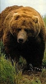 o-urso-baralho-cigano